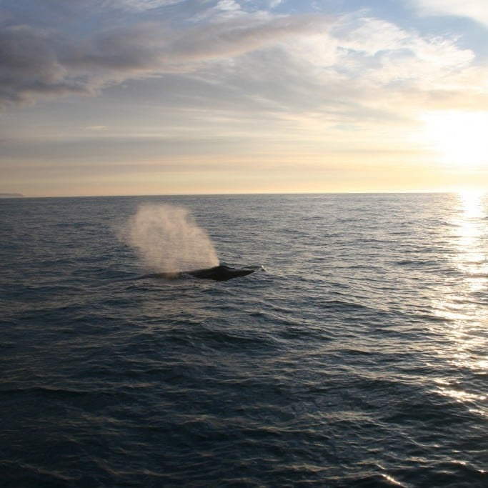 Whale watching in North Iceland